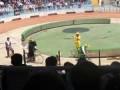 Медведь и обезьяны ездят на велосипедах в цирке ,  как вдруг...