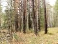 Как срубить дерево ножом