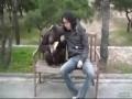 Две обезьяны