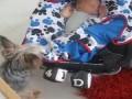 Собака укутывает ребенка