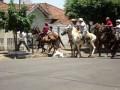Питбуль атакует лошадь