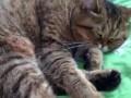 Кошка. Фаза сна для мучений