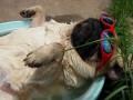 Собака на релаксах