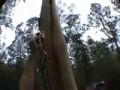 Как быстро залезть на дерево