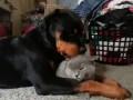 Нежная любовь Щенка и Котенка, Tender Love Puppy And Kitten.
