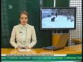 Аптеки ни при чем Догхантеры в Челябинске травили собак крысиным ядом