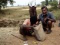 Индийские змееловы на строительстве газопровода