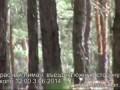 бтры в Красном Лимане