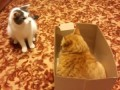 Большие войны котов