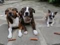 Дерзкий пес - The Sausage Thief!!