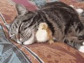 кот и птенец