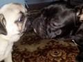 Собака не кот
