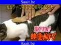 Кот и скотч