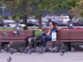 Нападение голубей (розыгрыш) // Pigeons attack people (Russian prank)