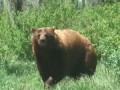 Back Scratching Bear