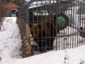 Медведь и алкаши