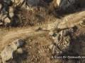 Приятные мелочи GTA V