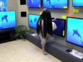 Rings (2017) - TV Store Prank