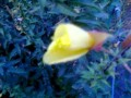 Интересный цветок
