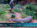 Не тыкайте в крокодила палкой!