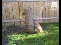 Белка и собакен