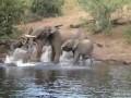 Слон и крокодил