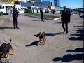 Бездомные собаки несогласны с министром
