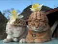 Коты в нирване