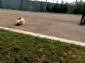 Очень злой собаК