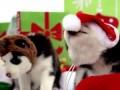 Рождественские хаси