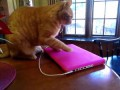 Не дает ноутбук