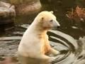 Knut geht an Land