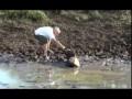 человек спас увязшую в болоте антилопу гну