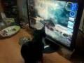 Кот и пузыри