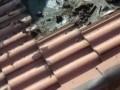 Мыши под крышей