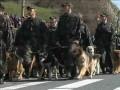Торжественный пронос собаки на параде