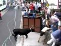 Месть быка