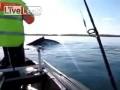 Отец и дочь: наблюдение за китами с каноэ