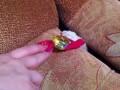Кот тырит конфетку