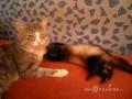 Кот и надоедливый хорек