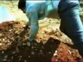 Индийский фильм Жесть Убить Человека ФРУКТОМ /Banana Figth