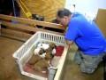Как отключить щенят