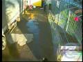 В Тверской области тигр напал на мужчину