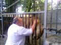 Хозяин зоопарка общается со зверями