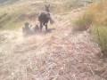 Собакен и Ослик