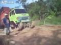 Грузовик в Индонезии - грязь