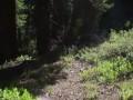 Прыжки с тарзанки в горную реку