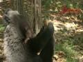 Медведь-интеллигент