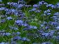 Красота Божьего творения: Цветы