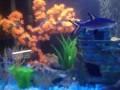 Новая обстановка аквариума